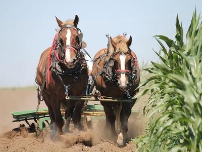 Agricultura tradicional y moderna